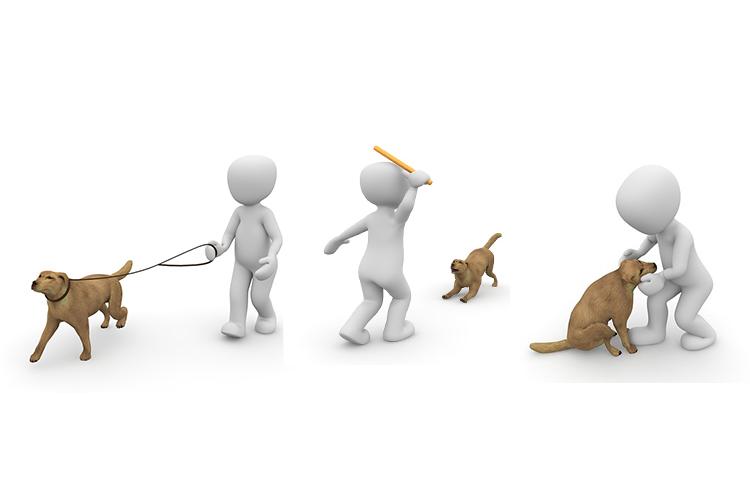 Passejada de gossos solidària @ Plaça de Pau Casals